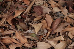 Brown Leaves on the ground Stock Photo