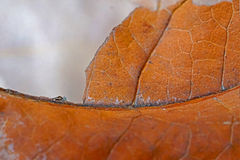 Brown leaves. In the ground Stock Photography