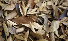 Brown leaves. In the ground Royalty Free Stock Photos