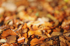 Brown leaves on ground Stock Photography