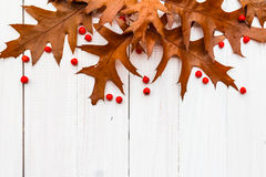 Brown leaves rowan white boards composition autumn Royalty Free Stock Image