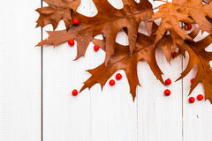 Brown leaves rowan white boards composition autumn Royalty Free Stock Photography