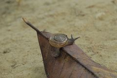 Brown leaves  with snails and sunlight stock photography
