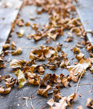 Brown leaves on wooden ground in autumn season Royalty Free Stock Image