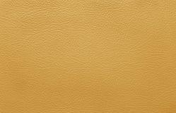 Brown-Lederhaut lizenzfreies stockfoto