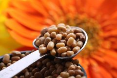 Brown lentil. Beautiful shot of brown lentils in spoon Royalty Free Stock Photography
