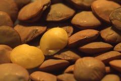 Brown lentil grains. Macro. Food photo. Background stock images