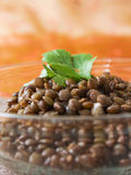 Brown Lentils Royalty Free Stock Photography