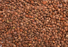 Brown Lentils. Background of the Brown Lentils Stock Photos
