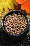 Brown lentils. Beautiful shot of brown lentils in bowl Royalty Free Stock Images
