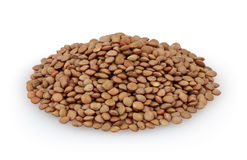 Brown lentils isolated on white background Stock Images