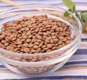 Brown lentils. Some dried brown lentils in a bowl Stock Images