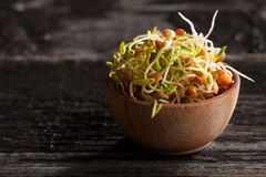 Brown Lentils Sprouts in a Wooden bowl. Close-up of Brown Lentils Sprouts in a Wooden bowl Royalty Free Stock Photos