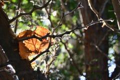 Brown liść Zdjęcia Stock