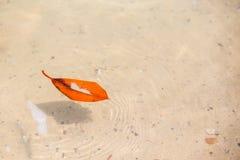 Brown liść w wodzie Obrazy Stock