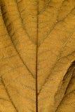 Brown liścia tekstura Zdjęcia Stock