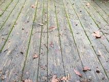 Brown liście na ganeczku Obrazy Royalty Free
