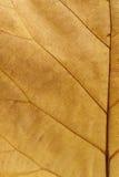Brown liść Zdjęcia Royalty Free