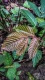 Brown liście zdjęcia stock