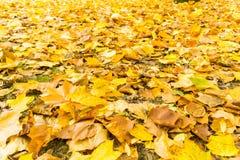 Brown liście na ziemi w jesieni Zdjęcia Royalty Free
