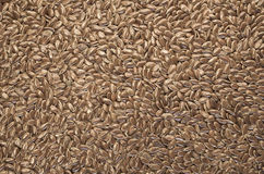 Brown linseeds close up Stock Photography