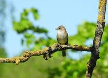 Brown little bird stock photos