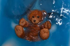 Brown little wet bear in blue water stock photography