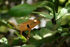 Brown lizard,tree lizard,. Details of lizard skin stick on the tree Stock Photo