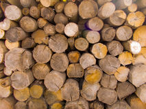 Brown  log background. Woodpile of cut Lumber for forestry industry.Woodpile of cut trees in the lumber yard. Brown warm Background and texture with space for Stock Image
