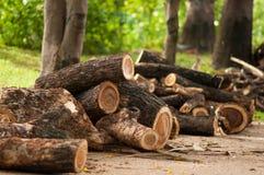 Brown Log, Piece of wood. Pile of log wood on the floor royalty free stock image