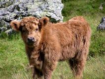 Brown Long Coat 4 Leg Animal on Green Grass during Daytime royalty free stock images
