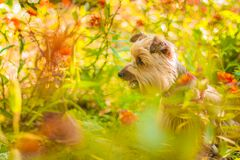 Brown Long Coat Dog Near Green Plants Royalty Free Stock Photo