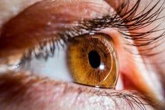 Brown mänskligt öga Arkivfoton