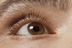 Brown man's eye closeup Stock Image