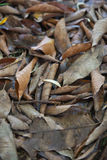 Brown many leaves wet on dry ground. With background Royalty Free Stock Images