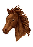 Brown mare horse head sketch with arabian filly Royalty Free Stock Image