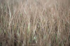 Brown meadow background. Grass pattern texture background. Blurry nature background. Dried grass leaves in the field stock photography