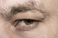 Brown men`s eyes,angry and contemptuous. Brown male eye, angry and contemptuously looking at you Stock Photography