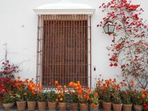 Brown Metal Window Frame Surrounded by Flowers Stock Photo