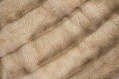 Brown mink fur coat texture background Stock Image