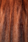Brown mink fur texture or background Royalty Free Stock Photography