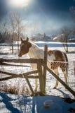 Brown mit Schimmel am Bauernhof bedeckt durch Schnee Stockbild