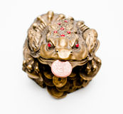 Brown Money Frog with coin. Little chinese statuette with yellow coin  bearing success and prosperity Stock Images