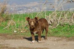 Brown mongrel dog Stock Photos