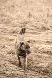 Brown mongrel on  spring day. Brown mongrel on a spring day in the walking Royalty Free Stock Photography