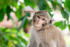 Brown monkey inclined his neck to look suspiciously stare Stock Photo