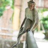 The brown monkey sitting on the iron rail. Is going to cry Stock Photos