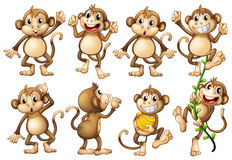 Brown monkeys in different actions Royalty Free Stock Image