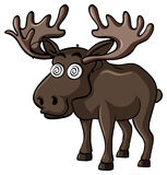 Brown moose with dizzy face Royalty Free Stock Photography