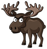 Brown moose with serious face Royalty Free Stock Image